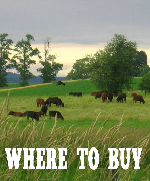 Where to buy pastured meat from Bendy Brook Farm in Berks County PA